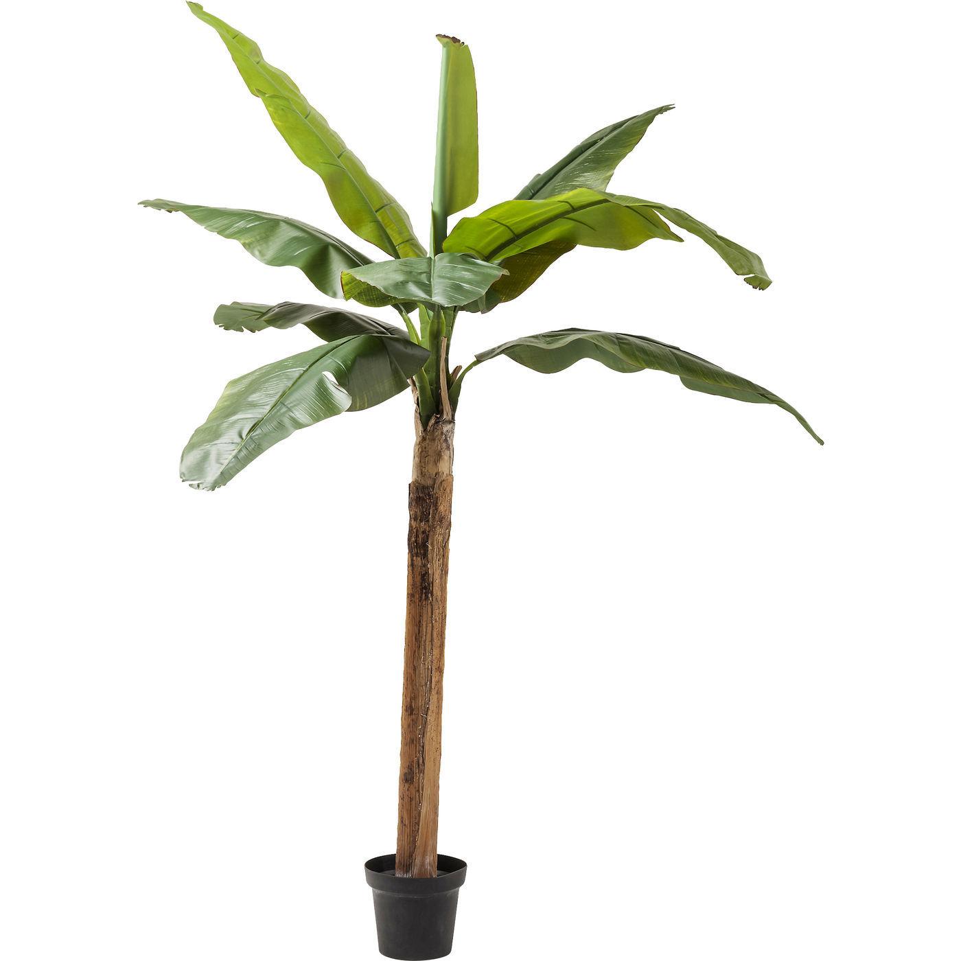Deco Plant Banana Tree 190cm - KARE Tallinn
